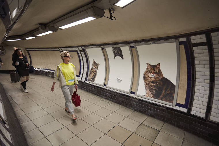 photos-chats-metro-3