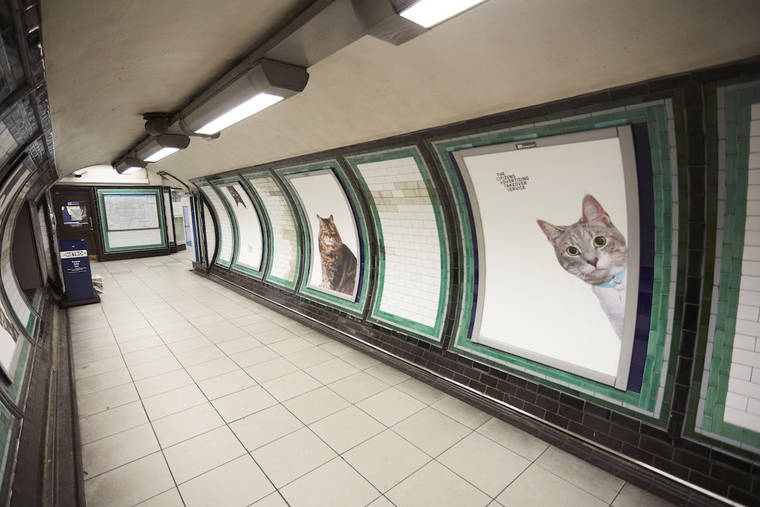 photos-chats-metro-7