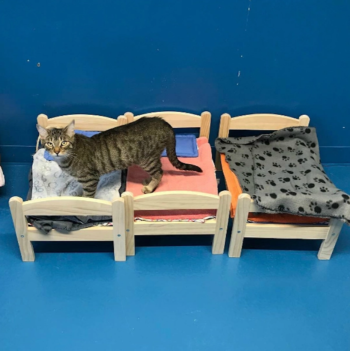 ikea offre des lits de poup es aux refuges pour chats abandonn s. Black Bedroom Furniture Sets. Home Design Ideas
