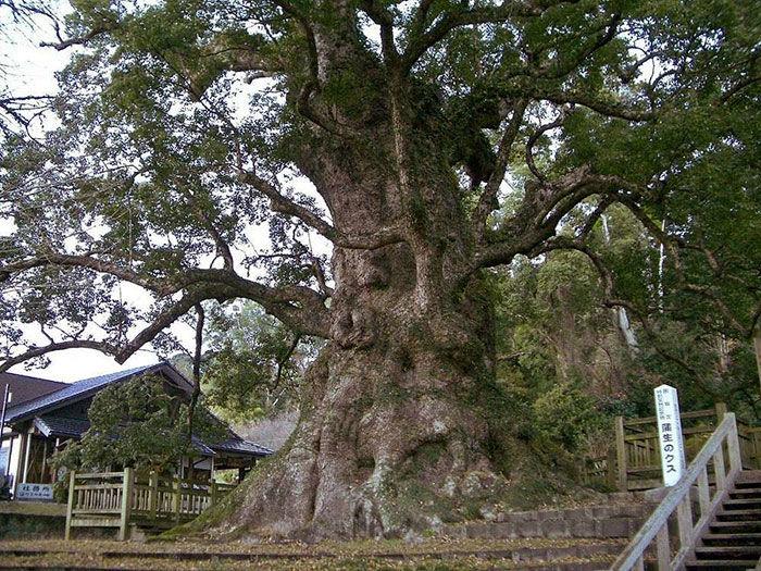La plus grande sculpture sur bois du monde