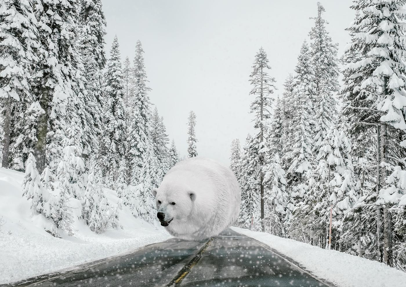 Aniball : les animaux boules de l'artiste Aditya Aryanto