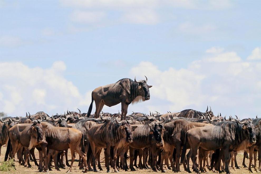 Les photos amusantes d'animaux du Comedy Wildlife Photography
