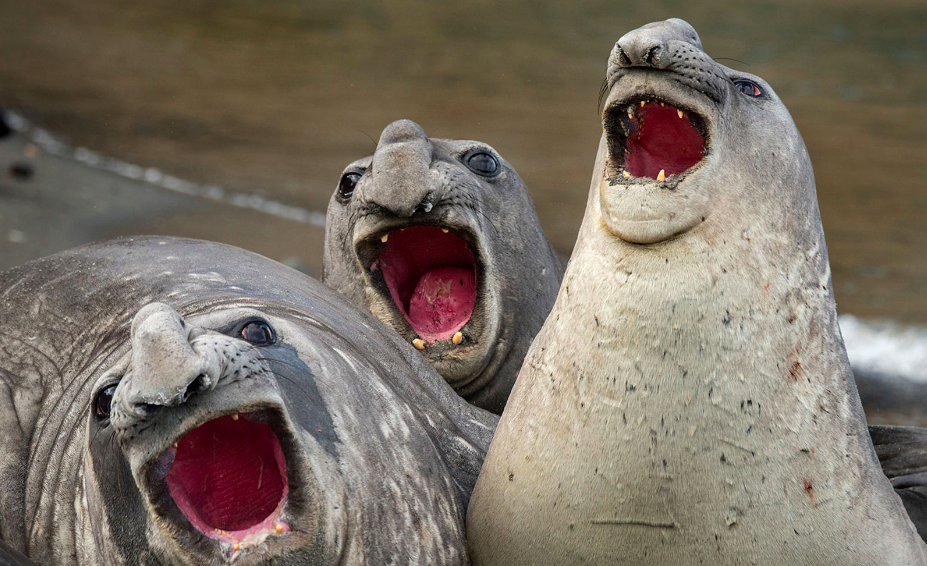 Les photos amusantes d'animaux du Comedy Wildlife Photography