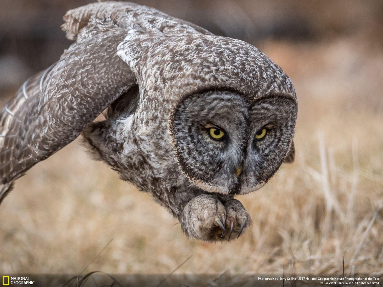 National Geographic Dévoile Les Photos Sélectionnées Pour Son Grand