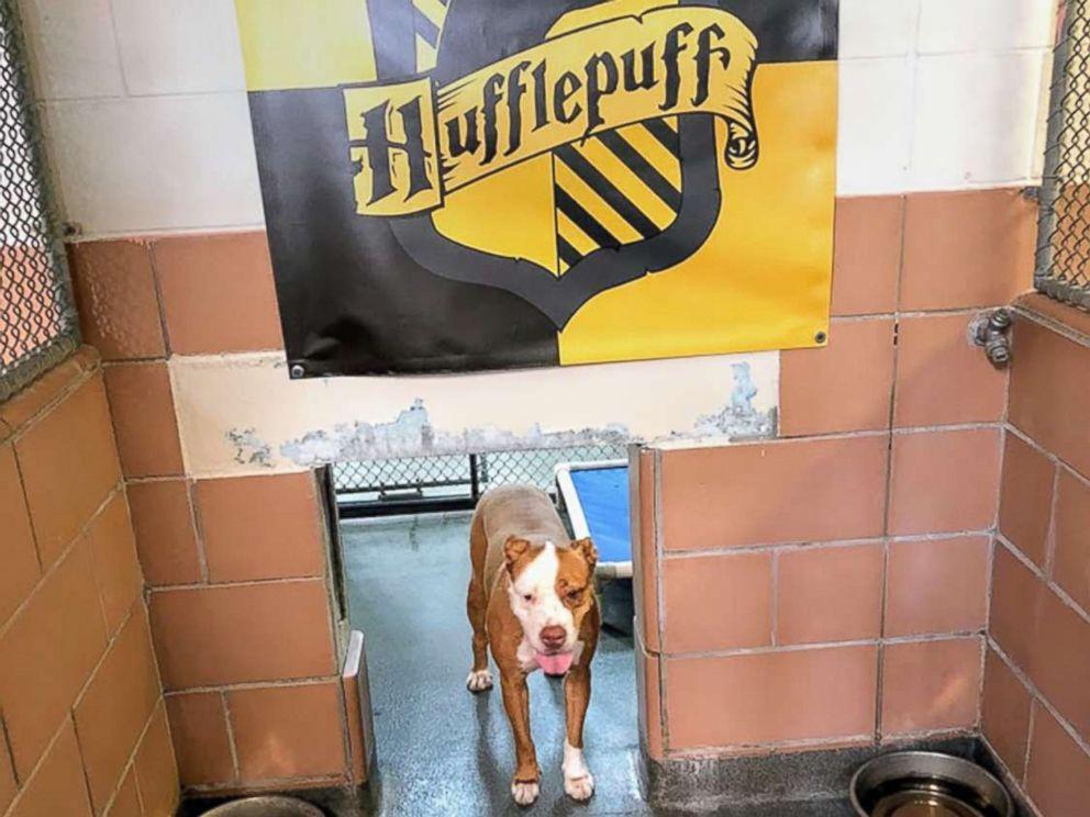 Ce refuge place les animaux dans des maisons comme à Poudlard