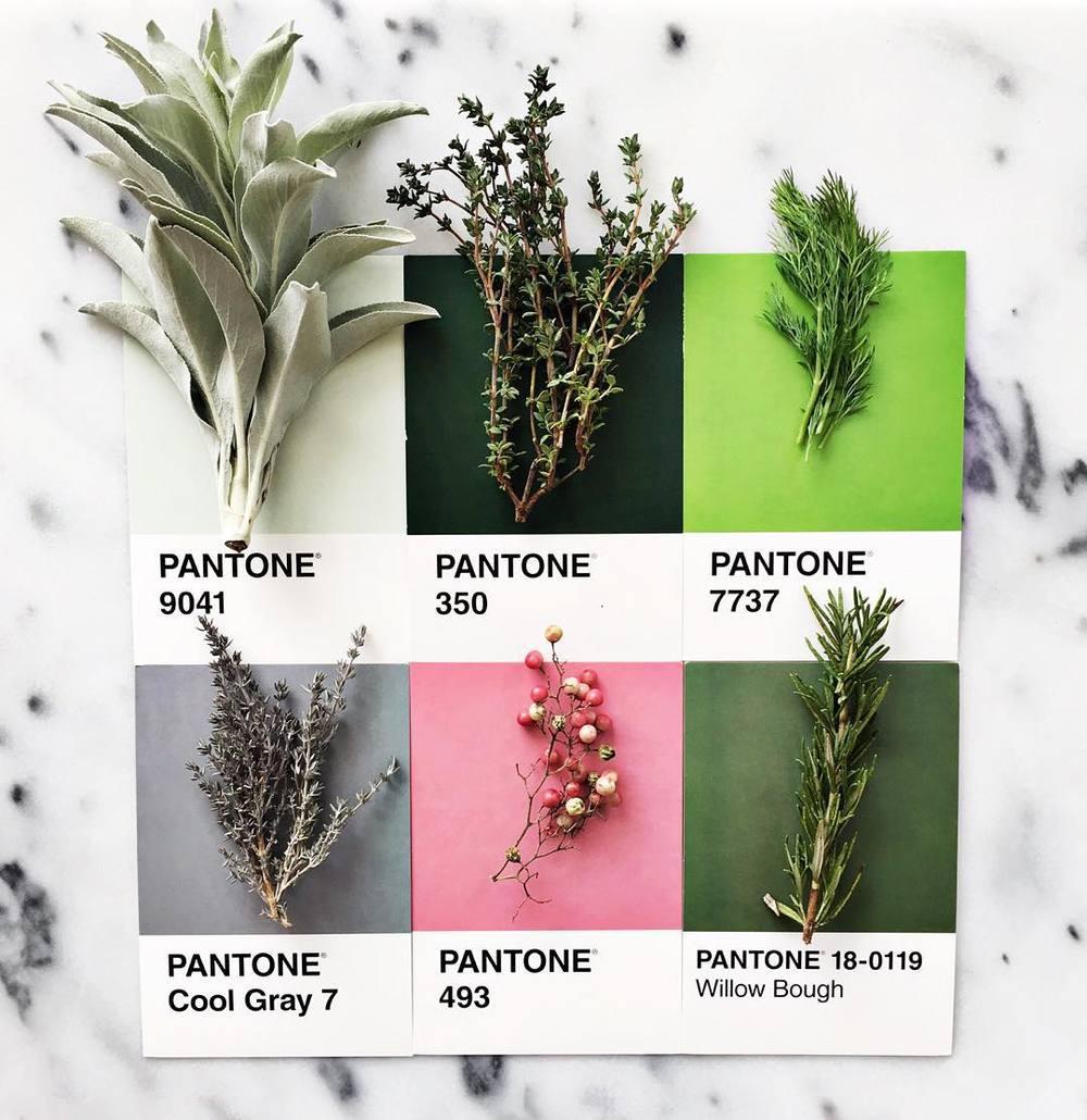 Lucia Litman fait correspondre des aliments aux couleurs du nuancier Pantone