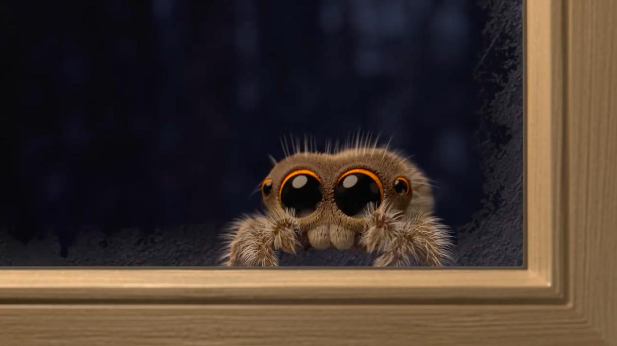 Lucas, l'araignée la plus mignonne du web est de retour en vidéo