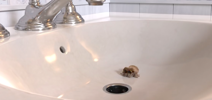 L'araignée Lucas est de retour pour un 3ème épisode dans votre salle de bain