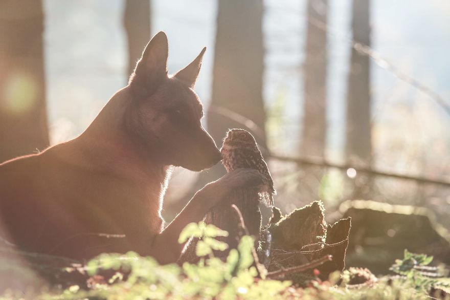 Tanja Brandt capture l'amitié étonnante entre un chien... et une chouette