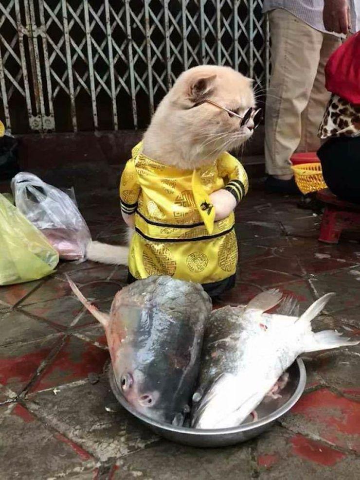 https://creapills.com/wp-content/uploads/2018/03/chat-vendeur-poissons-vietnam-4.jpg