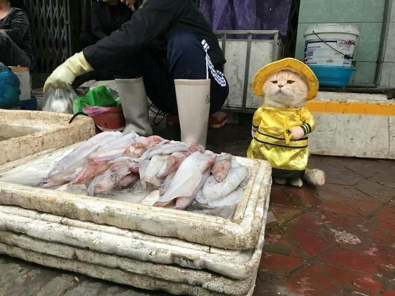 https://creapills.com/wp-content/uploads/2018/03/chat-vendeur-poissons-vietnam-home-2.jpg