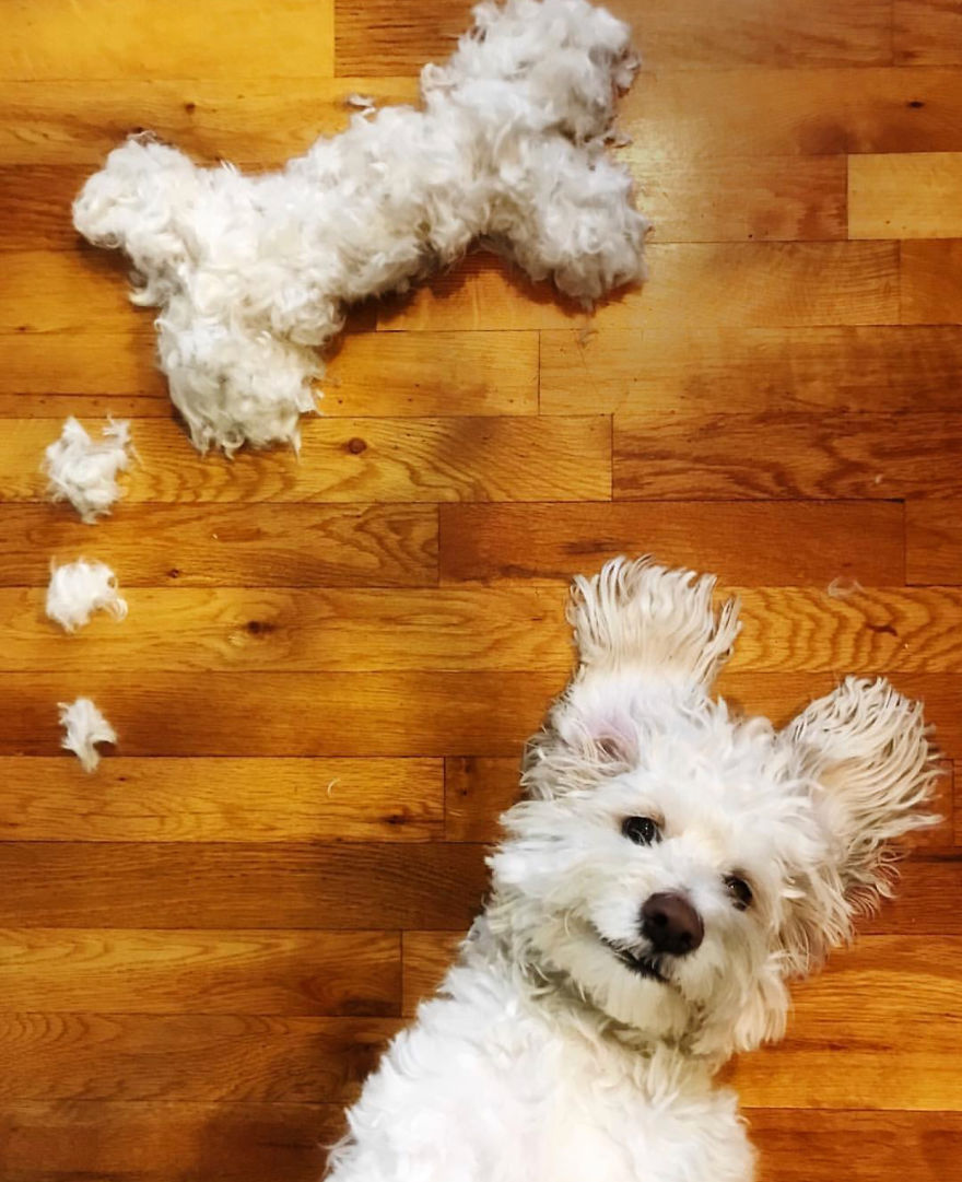 À chaque nouvelle coupe, elle réalise des dessins avec les poils de son chien
