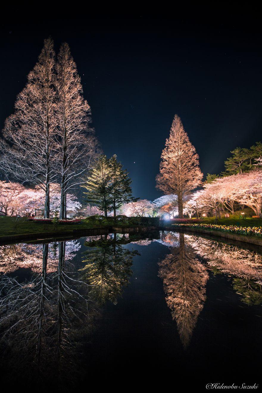 Japon - Le temps des cerisiers en fleurs Photographe-beaute-cerisiers-japon-18