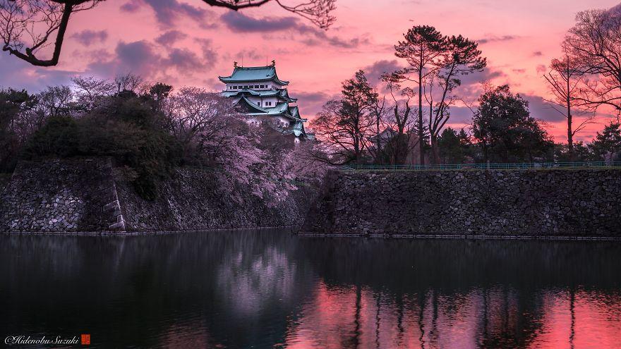 Japon - Le temps des cerisiers en fleurs Photographe-beaute-cerisiers-japon-4