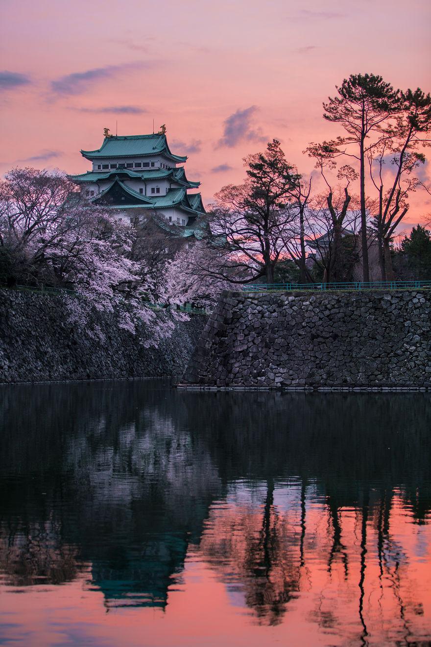 Japon - Le temps des cerisiers en fleurs Photographe-beaute-cerisiers-japon-5