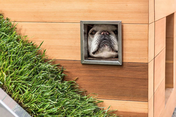 This creative studio has created the ultimate niche for dogs (with integrated terrace)