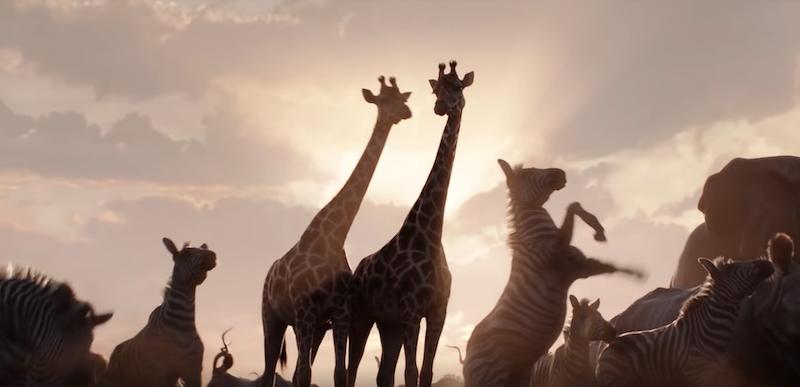 """Disney dévoile la bande d'annonce du film live """"Le Roi Lion"""" ! By  Thomas R.  Disney-film-roi-lion-1"""