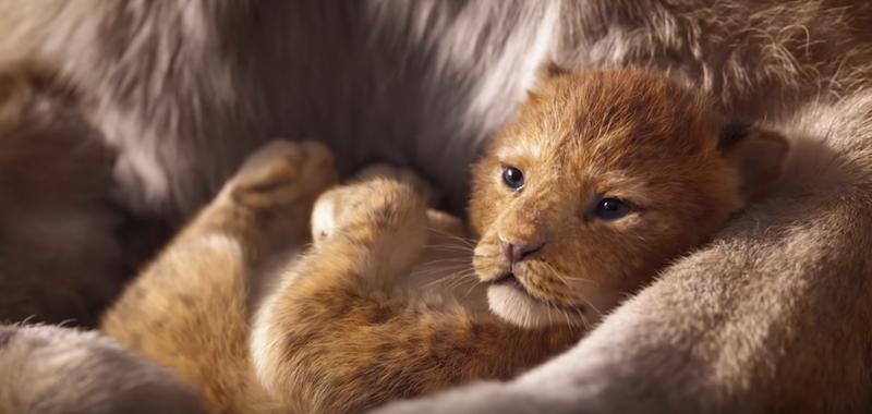 """Disney dévoile la bande d'annonce du film live """"Le Roi Lion"""" ! By  Thomas R.  Disney-film-roi-lion-4"""