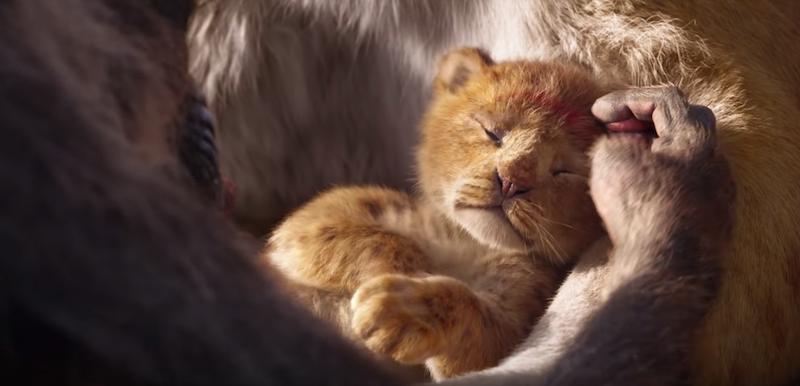 """Disney dévoile la bande d'annonce du film live """"Le Roi Lion"""" ! By  Thomas R.  Disney-film-roi-lion-5"""