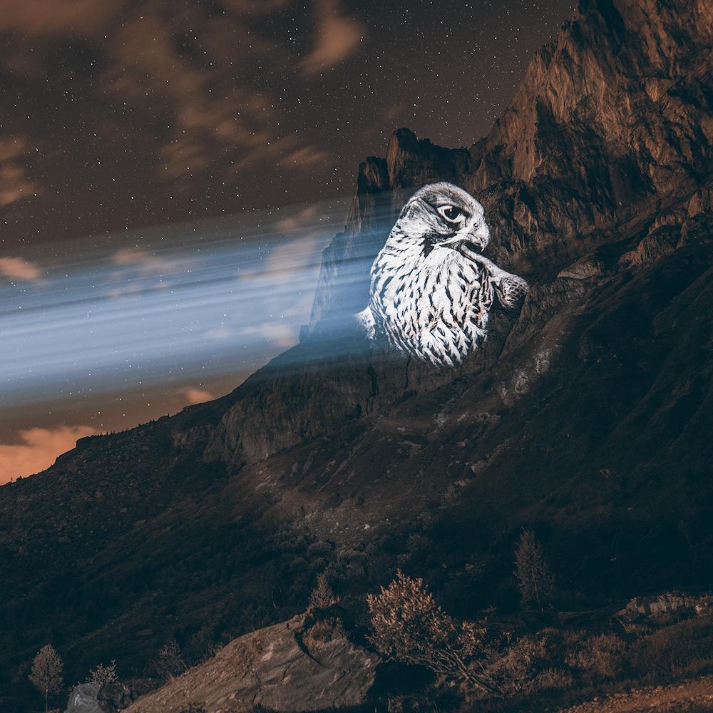 Cet artiste projette des animaux sur des falaises pour sensibiliser à la sauvegarde du monde sauvage ! By Mélanie D.  Julien-nonnon-animaux-lumiere-projection-extinction-9