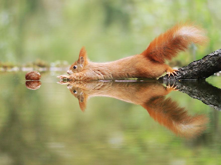 Scènes amusantes dans le quotidien des animaux sauvages Julian-rad-photos-animaux-sauvages-1
