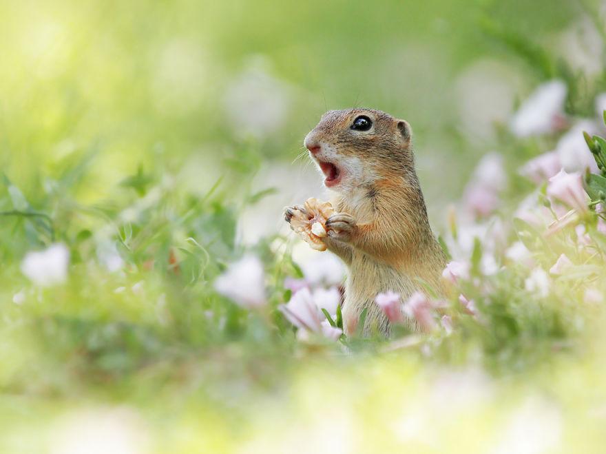 Scènes amusantes dans le quotidien des animaux sauvages Julian-rad-photos-animaux-sauvages-11