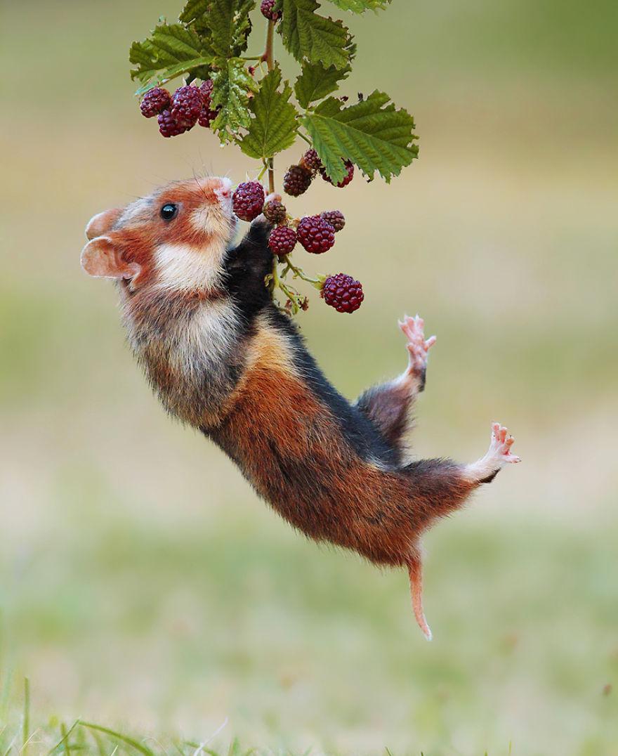 Scènes amusantes dans le quotidien des animaux sauvages Julian-rad-photos-animaux-sauvages-13