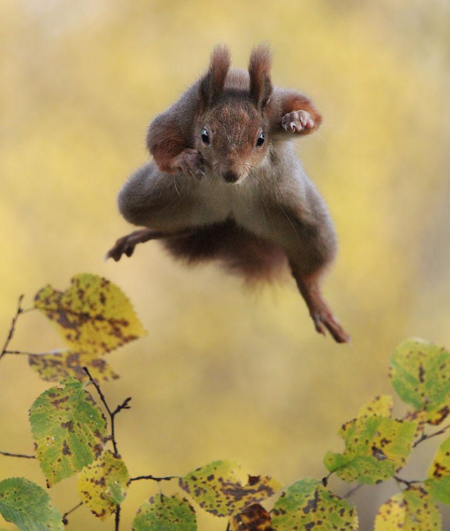 Scènes amusantes dans le quotidien des animaux sauvages Julian-rad-photos-animaux-sauvages-24
