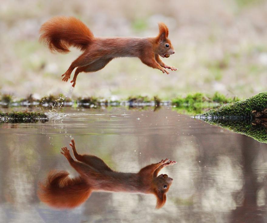 Scènes amusantes dans le quotidien des animaux sauvages Julian-rad-photos-animaux-sauvages-29