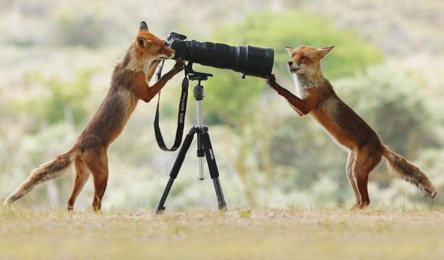 Scènes amusantes dans le quotidien des animaux sauvages Julian-rad-photos-animaux-sauvages-6