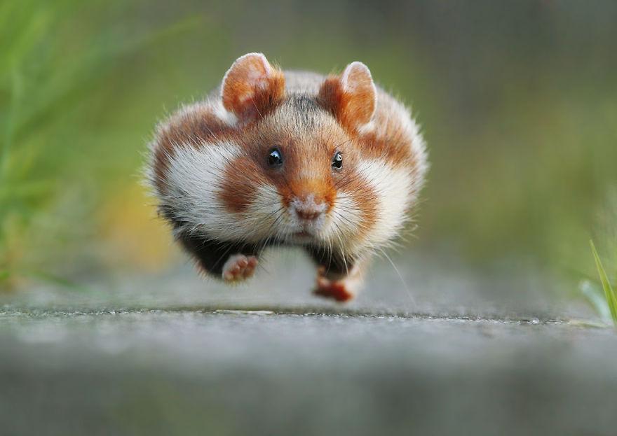 Scènes amusantes dans le quotidien des animaux sauvages Julian-rad-photos-animaux-sauvages-7