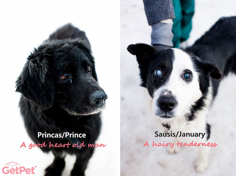 This dating app is inspired by Tinder to help abandoned dogs find a family 5