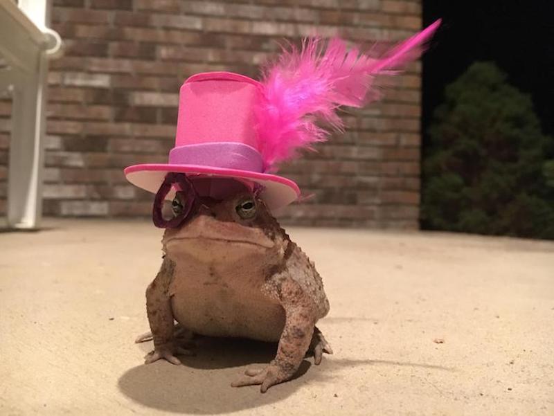Il confectionne pour son ami crapaud des chapeaux miniatures élégants et amusants