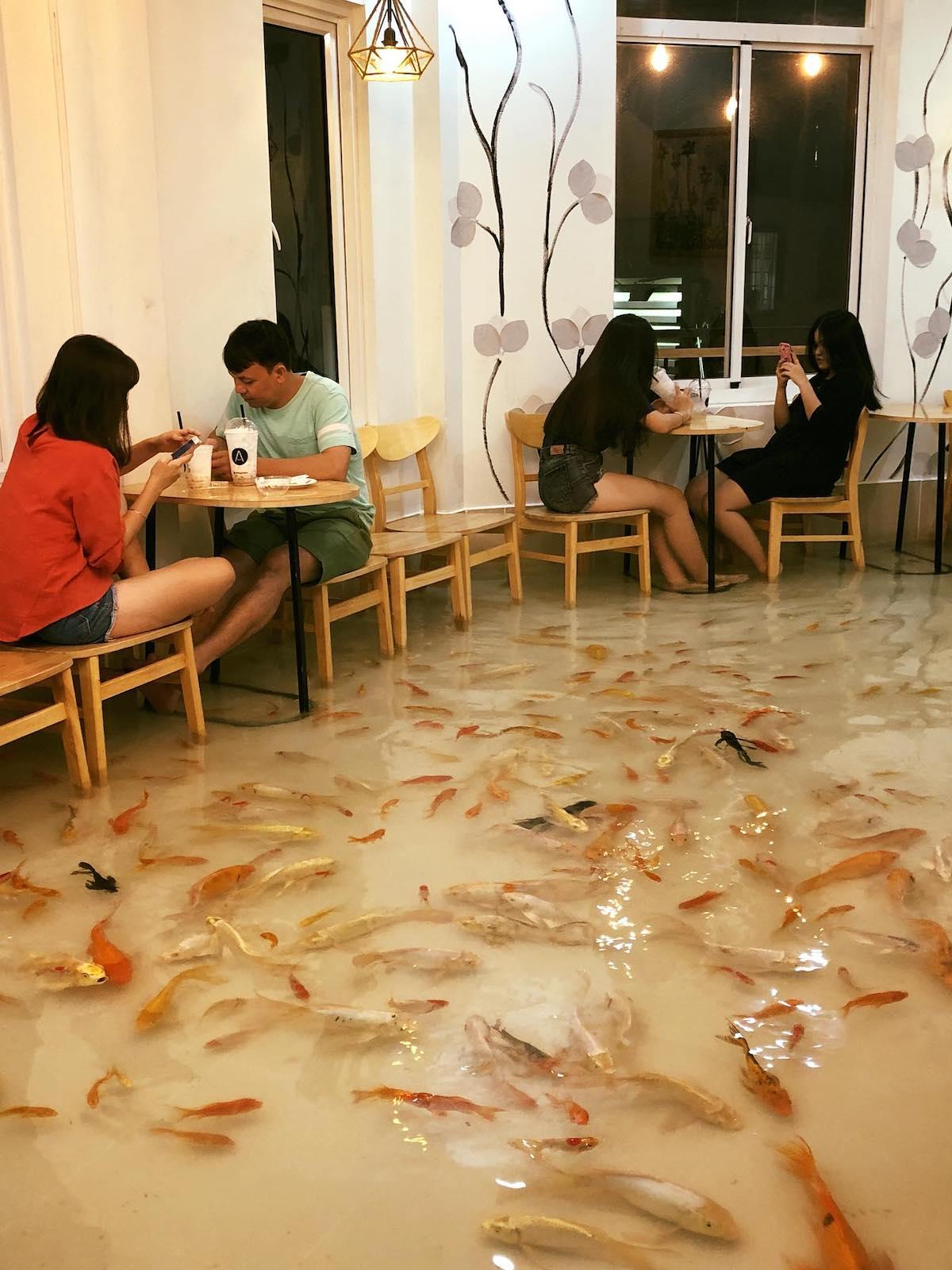 Au Vietnam, ce café vous propose de manger les pieds dans l'eau entouré de poissons