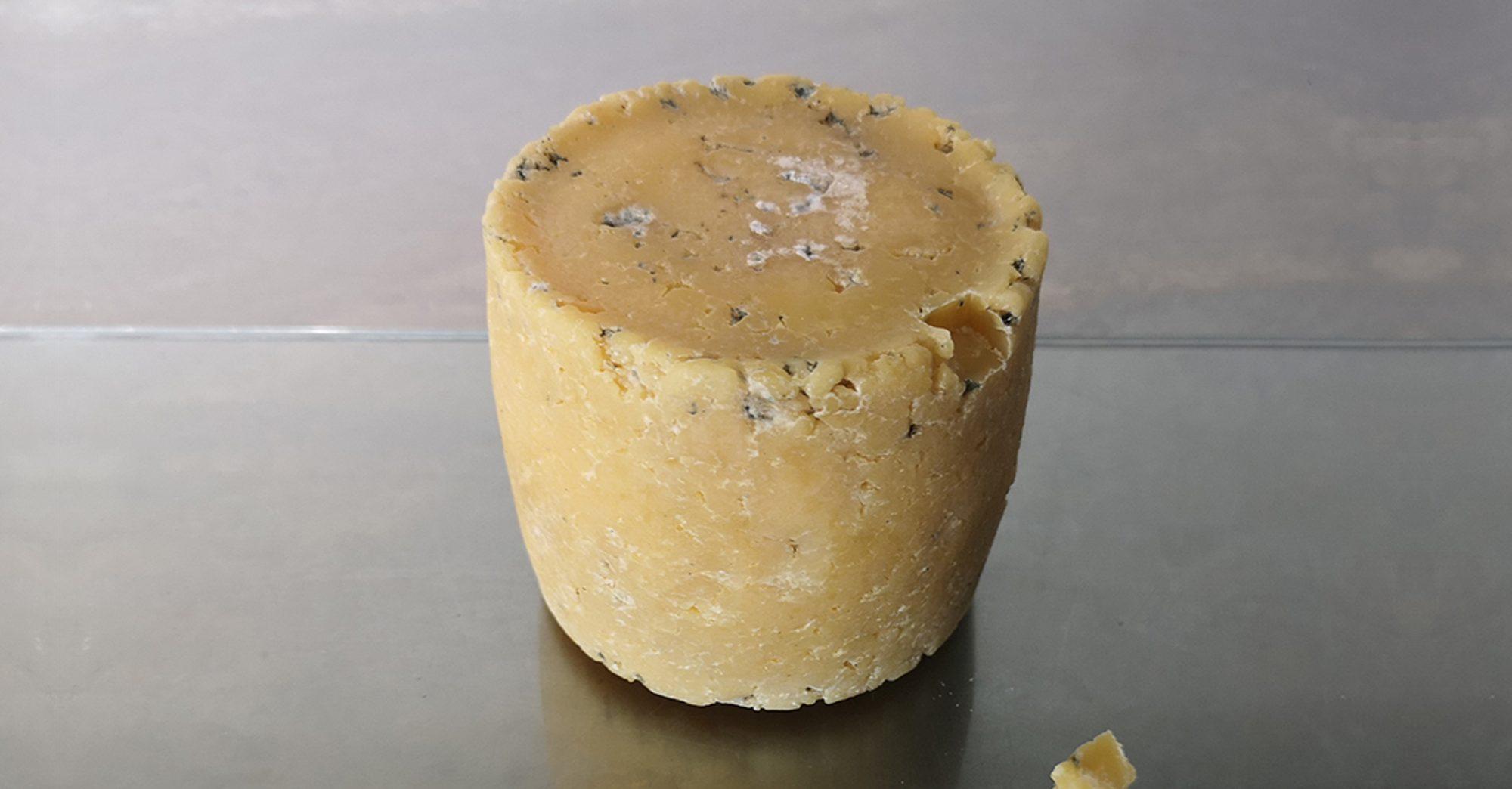 Un fromage créé à partir de bactéries humaines