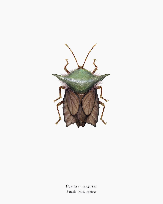 Insectes Star Wars arthropoda_iconicus