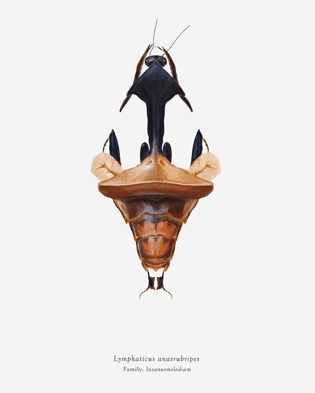 Insectes Looney Tunes arthropoda_iconicus