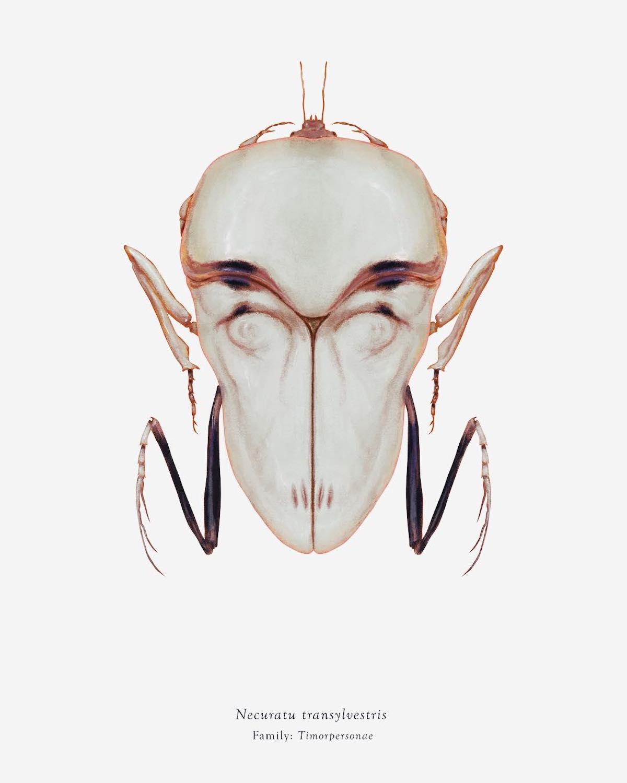 Insectes Nosferatu arthropoda_iconicus