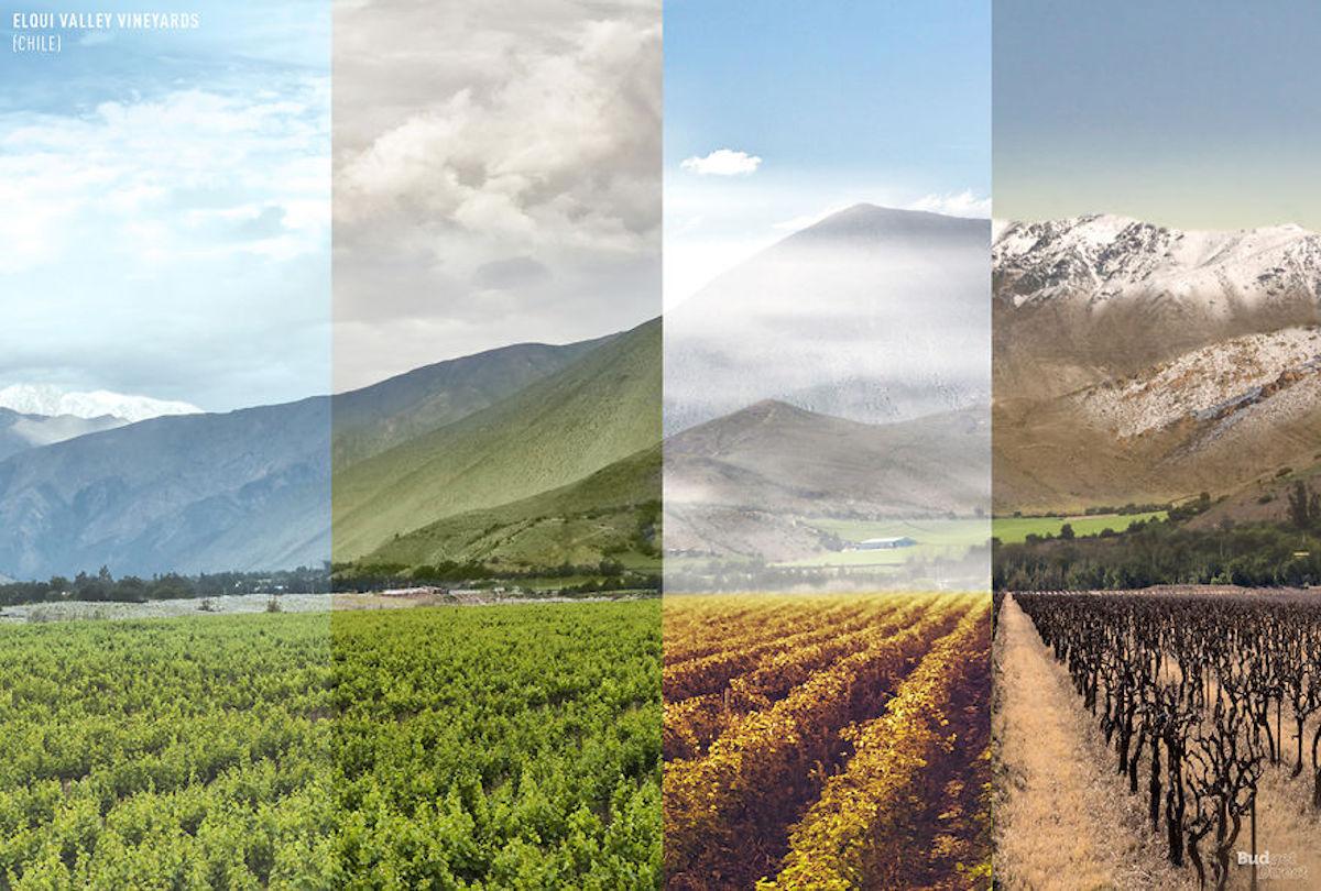 1 lieu 4 saisons Vignobles de la vallée d'Elqui BudgetDirect
