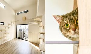 Des appartements conçus la vie de célibataire avec un chat