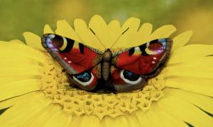 Ce papillon de l'artiste Johannes Stötter cache une performance incroyable de body-painting
