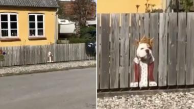 """Elle peint sa clôture pour créer un """"costume"""" à son chien qui adore regarder à travers"""