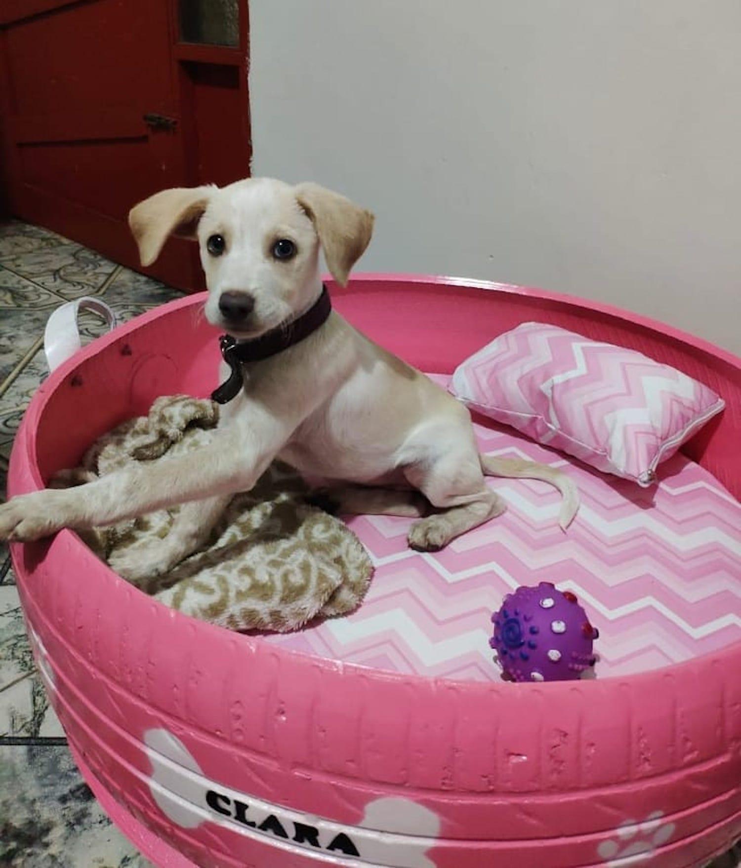 Le brésilien Amarildo Silva recycle les pneus usagés en panières pour chiens et chats