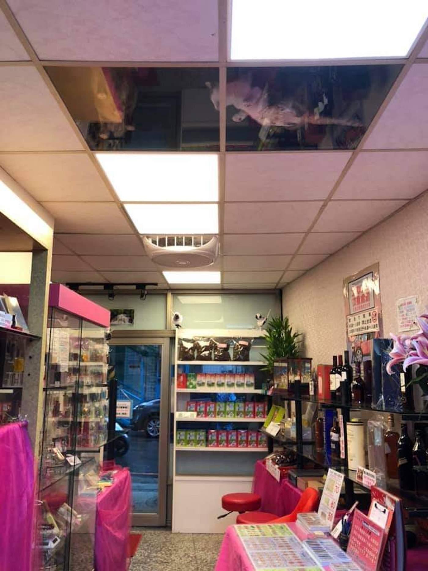 Ce commerçant a installer un plafond de verre pour que ses chats le regardent travailler
