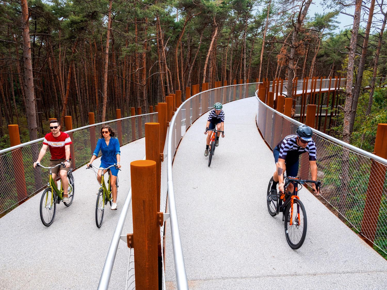 Belgique : une piste cyclable circulaire surélevée pour voir la forêt en hauteur