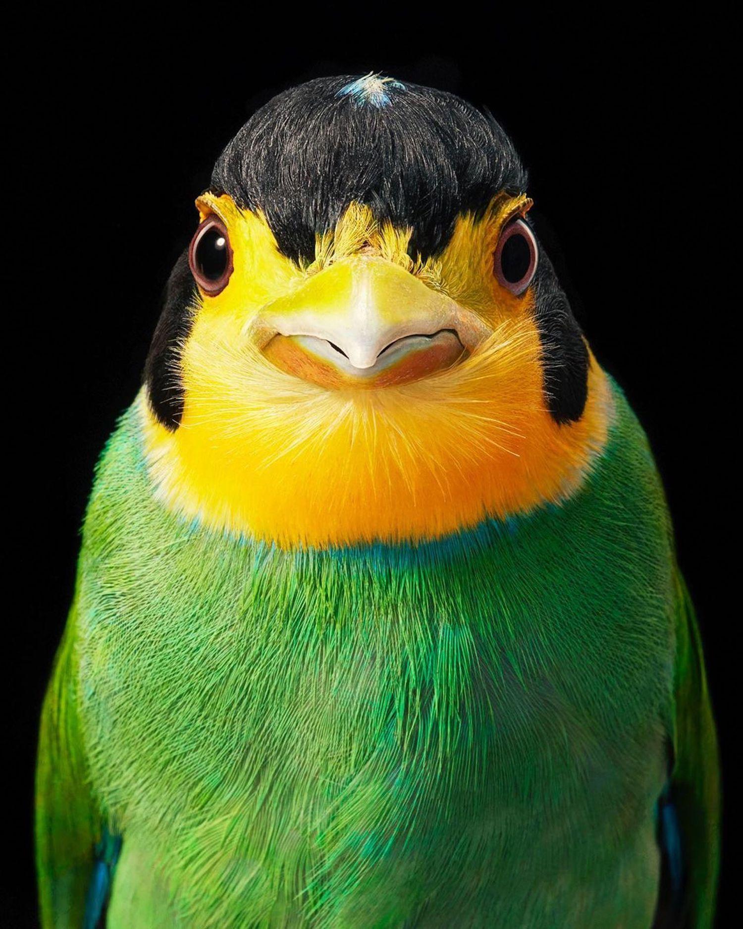 Le photographe Tim Flach capture des portraits saisissants d'oiseaux en voie de disparition