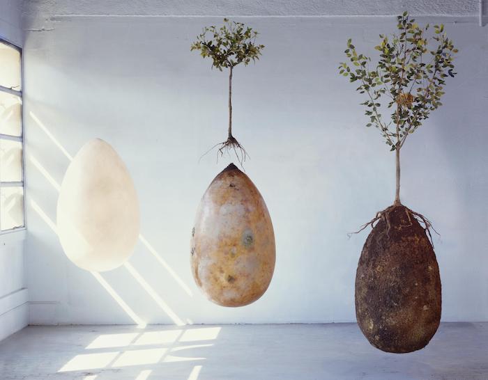 Capsula Mundi : la capsule funéraire qui transforme votre corps en arbre