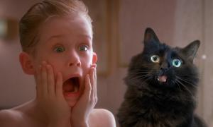 OwlKitty : ce couple incruste leur chat dans des films pour un résultat hilarant