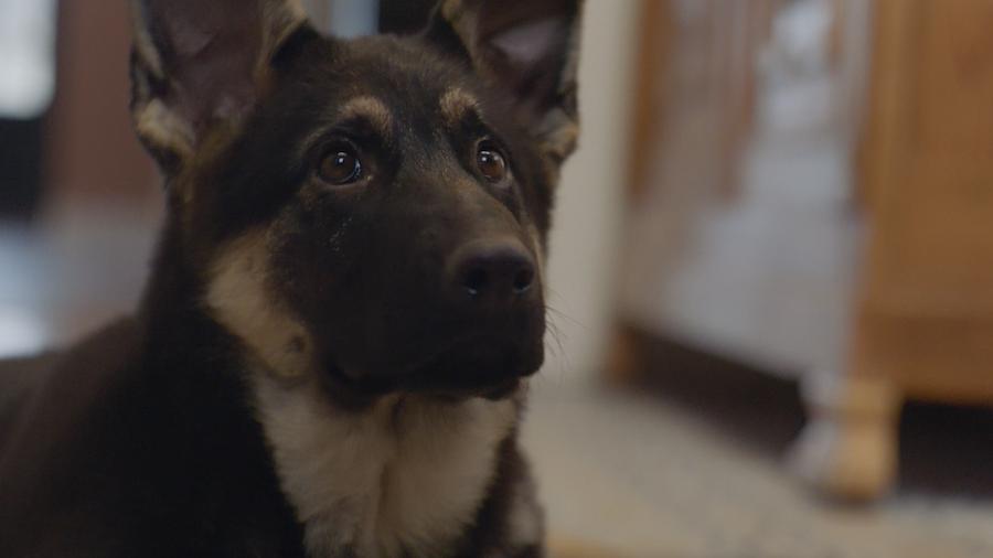Zoomalia dévoile une pub adorable sur la cohabitation avec vos animaux